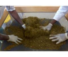 Besoin d'Artemisia Anti-malaria? Appeler 677049514 - 1/1