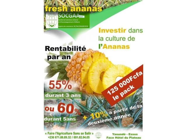 INVESTIR DANS L'ANANAS - 1/1