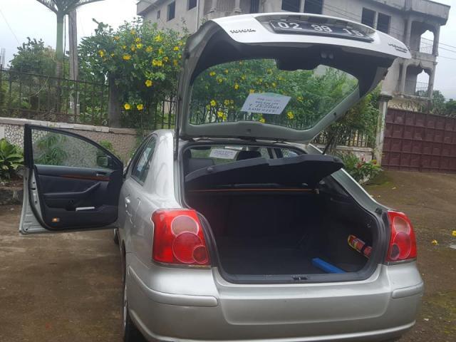 Avensis tete de couchon - 3/4